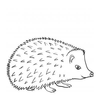 Ёжик ночное животное
