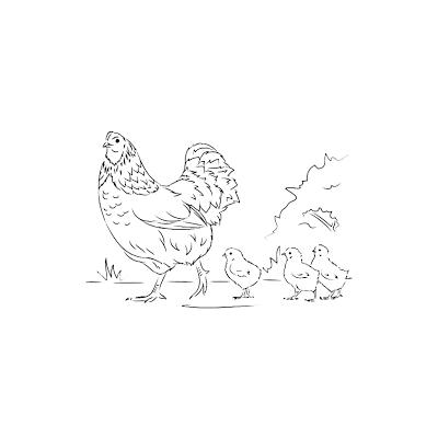 Курица - красавица