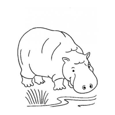 Картинка с бегемотом