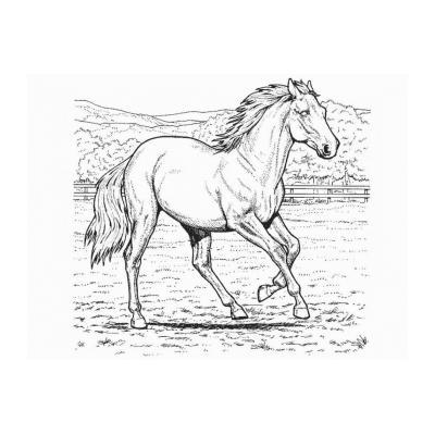 Раскрасить лошадь