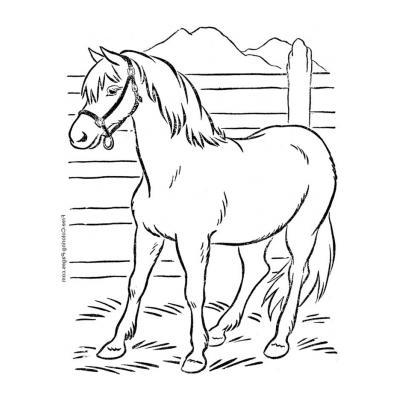 Раскраска Лошадь