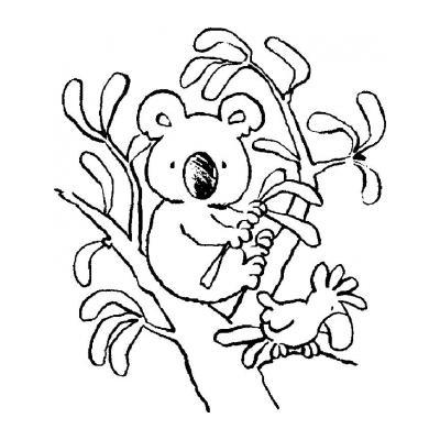 Коала ест траву