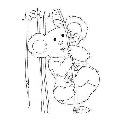 Серая коала