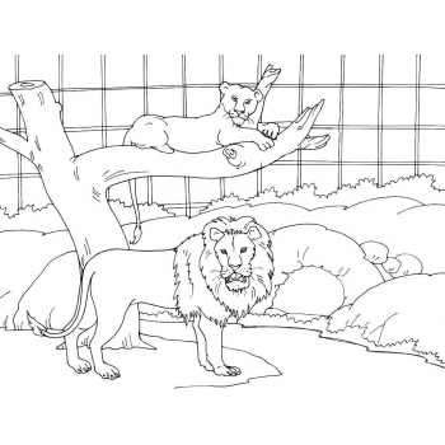 Лев - раскраска для детей