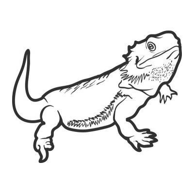 Юркая ящерица