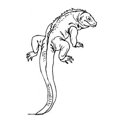 Ящерица - раскраска для детей