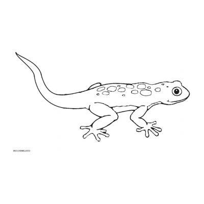 Как раскрасить ящерицу