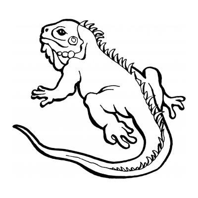 Ящерица ползет