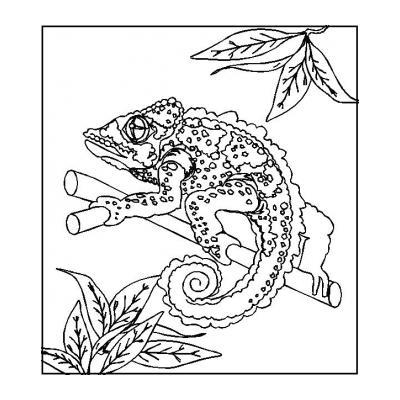Ящерица - пресмыкающееся