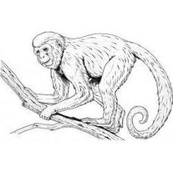 Как раскрасить обезьяну
