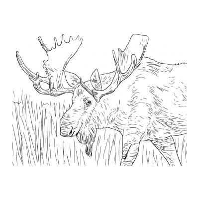 Лесной лось