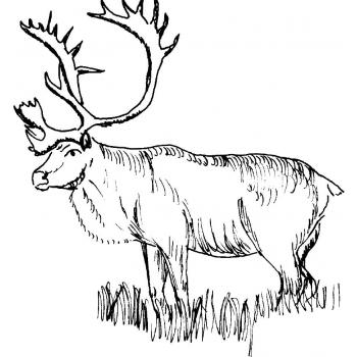 Распечатать раскраску с лосем
