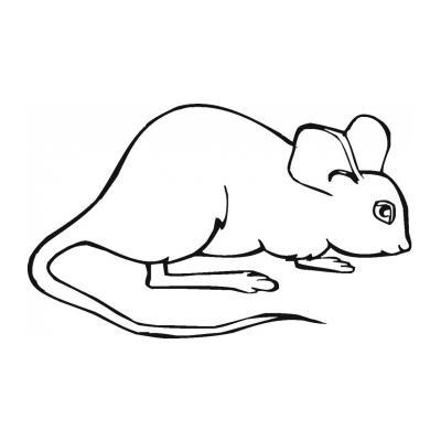 Мышка - милое животное