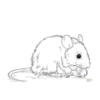 Хорошенькая мышка