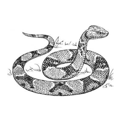 Питон - опасная змея