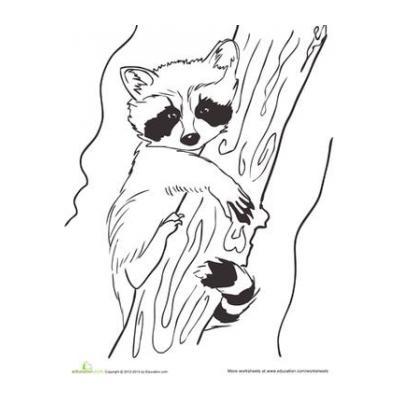 Енот - раскраска для детей