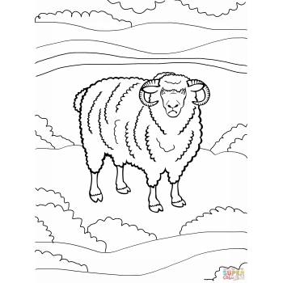 Раскраска барашек