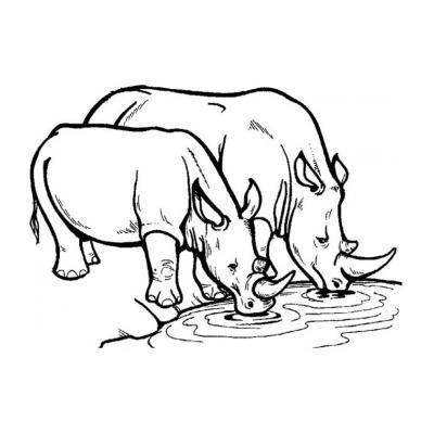 Раскраска с носорогом