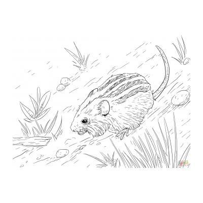 Мышка - раскраска для детей