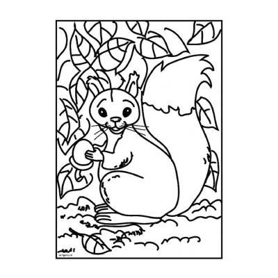Белка - раскраска для детей