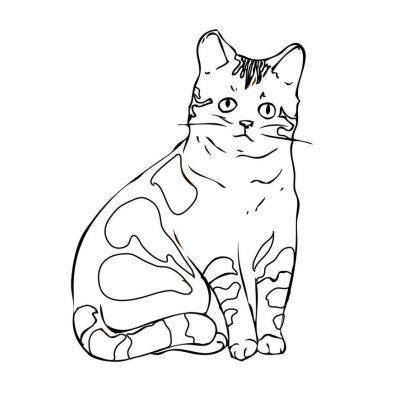 Шаблон кошки