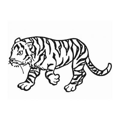 Хищный тигр