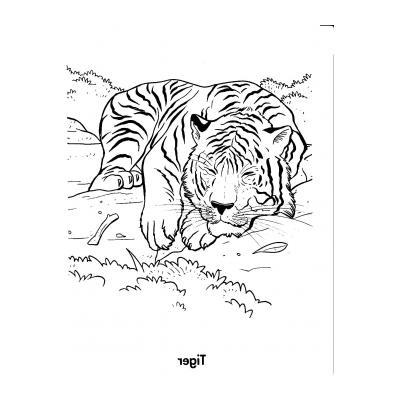 Тигр охотник