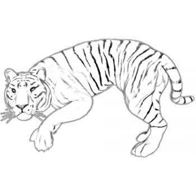 Тигр - раскраска для детей