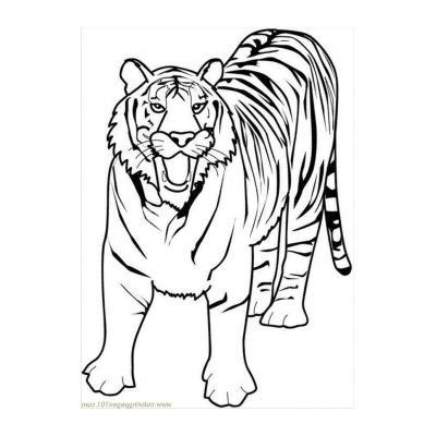 Милый тигр