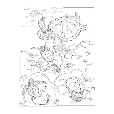 Веселая черепаха