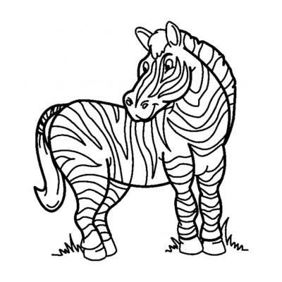 Зебра - травоядное животное