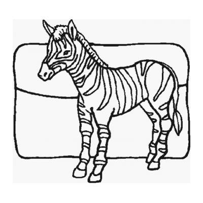 Зебра - раскраска для детей