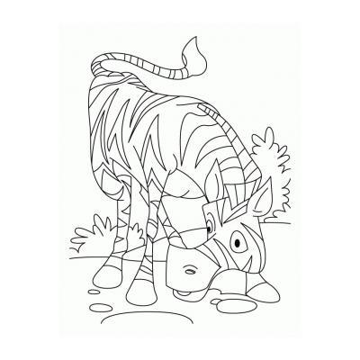 Хорошая зебра