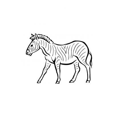 Зебра гуляет по траве