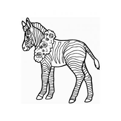 Зебра лошадка