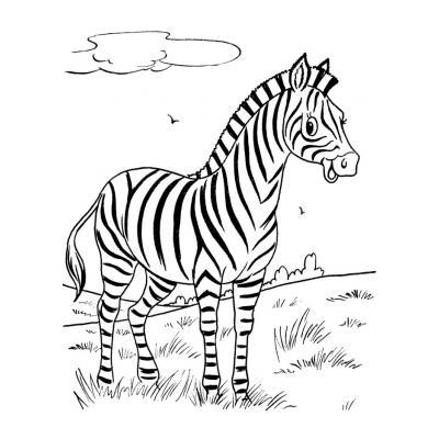 Зебра - дикое животное