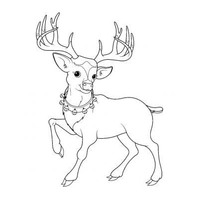 Раскраска животные севера