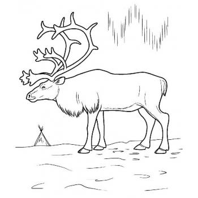 распечатать раскраску животные севера