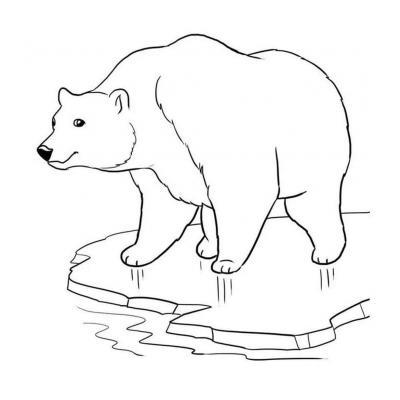 Раскраска на тему животные севера